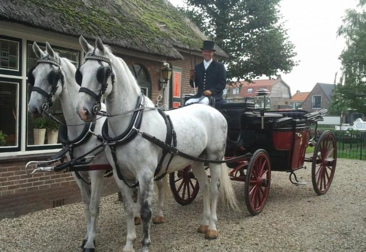 Landauer Rood-Zwart met 2 witte paarden