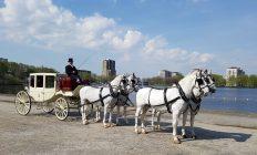 trouwkoets met witte paarden