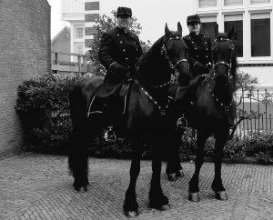uitvaart ere-escorte met Friese paarden