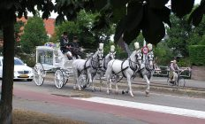 witte uitvaartkoets met witte paarden